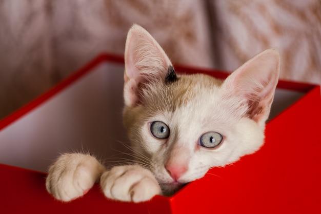 Маленькая кошка внутри красного ящика