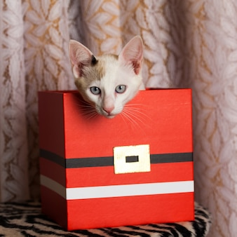 Small cat inside a red christmas box