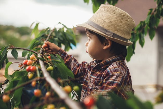 Small caucasian boy eating cherries from the tree while wearing a nice hat outside