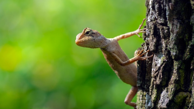 Small chameleon on tree, waiting concept