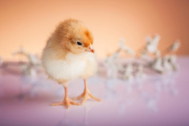 Pollo piccolo con decorazioni color pastello