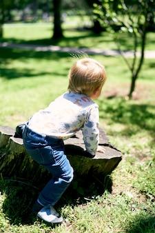 작은 아이는 녹지 가운데 공원에서 큰 나무 그루터기에 앉아있다.