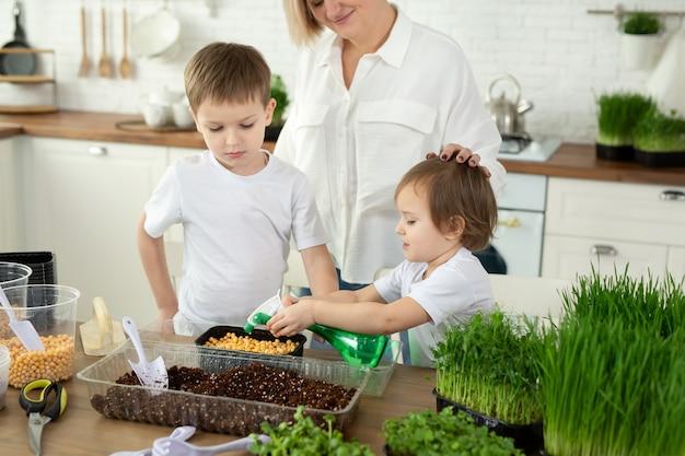 어린 아이들은 부엌에 있는 엄마가 미세 녹색 물을 심고 채우는 것을 돕습니다.