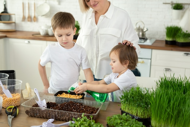 Small children help their mother in the kitchen to plant microgreen water and fill it
