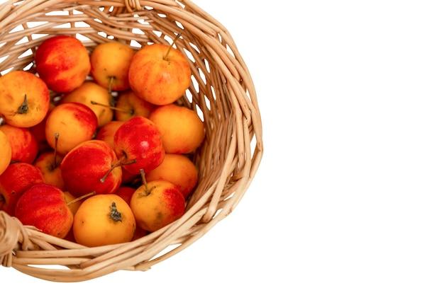 바구니에 작은 중국 사과. 밝고 육즙이 많은 빨간색과 노란색 과일. 자연에서 온 비타민. 흰색 배경에 고립. 텍스트를 위한 공간입니다.