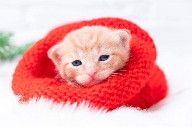 小さなクリスマスの生姜の子猫は、ニットの赤い帽子で甘く日光浴とカメラを見ています