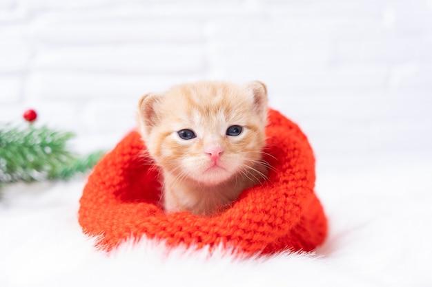 小さなクリスマスオレンジの子猫は、ニットのサンタ帽子をかぶってカメラを甘く日光浴して見ています