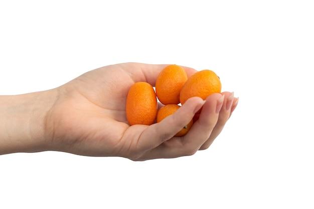 白い背景の写真で隔離の女性の手の小さな柑橘類のキンカン