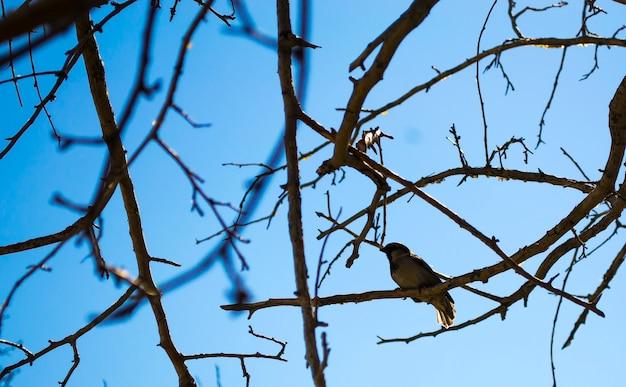 Городской воробей сидит на ветвях весеннего дерева