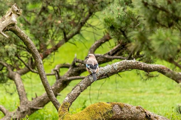 Маленькая красочная птичка в парке