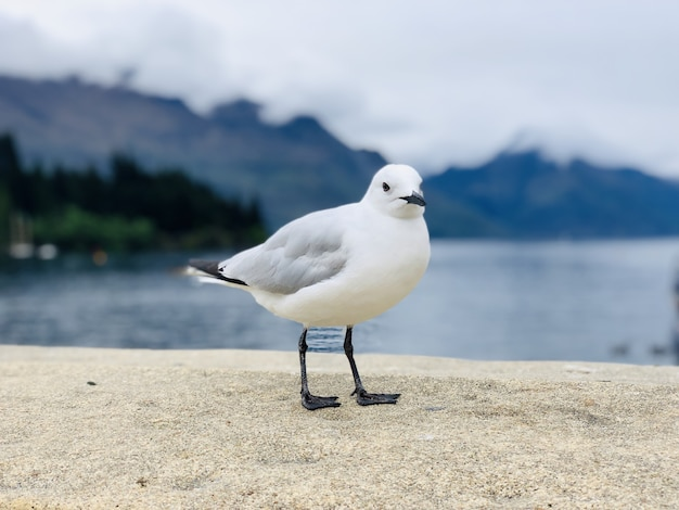 Small common gull standing on a stone with the blurred lake on the horizon