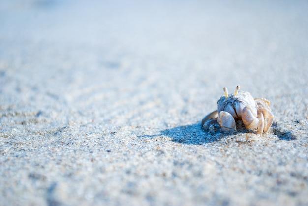 夏休みにビーチで泳ぐ小さなカニ