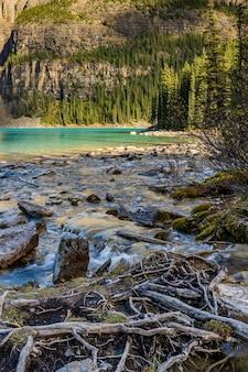 Небольшой ручей и долина на берегу озера в лесу в солнечный день.
