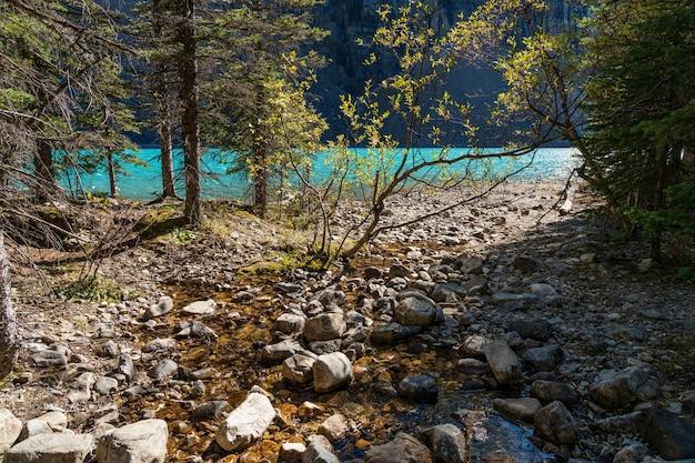 Небольшой ручей и долина на берегу озера в лесу в солнечный день. Premium Фотографии