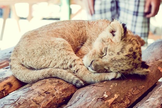 Маленький детеныш спит на деревянных досках, фильтр