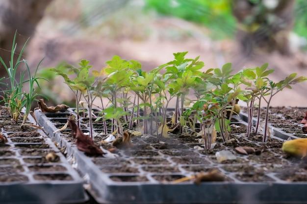 プラスチックポットでの植物の小規模栽培