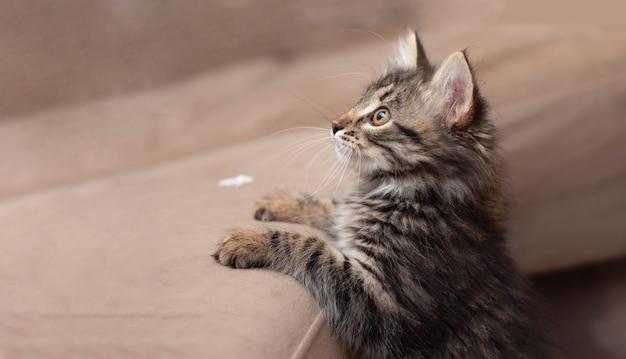 小さなかわいい美しい遊び心のある小さな茶色と灰色の子猫が立って左を見て