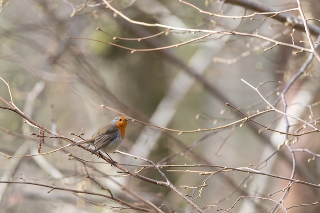 Small cute bird sitting on the branch of a tree