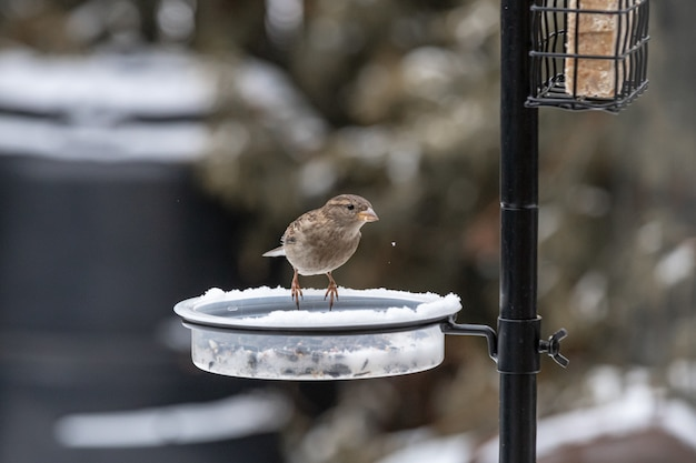 Small cute bird sitting on the feeder and eating in the winter