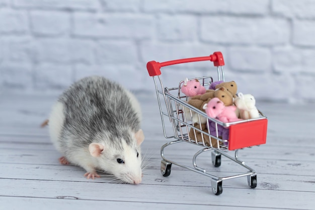 A small cute black and white rat next to the grocery cart is packed with multicolored teddy bears. shopping in the market. buying gifts for birthdays and holidays.