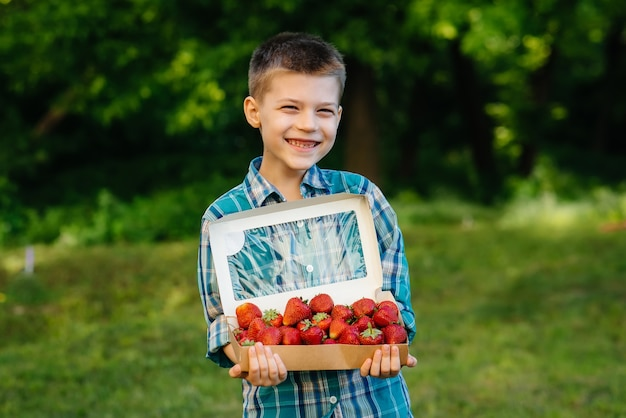 A small cute boy stands with a large box of ripe and delicious strawberries
