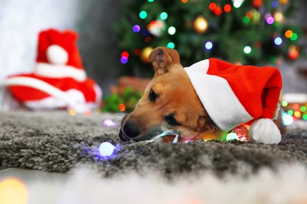 Маленькая милая забавная собака играет с гирляндой в новогодней шапке