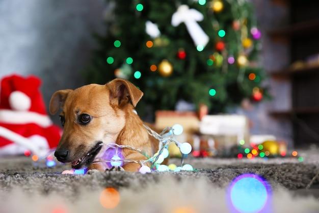 Маленькая милая забавная собака с гирляндой на новогоднем фоне
