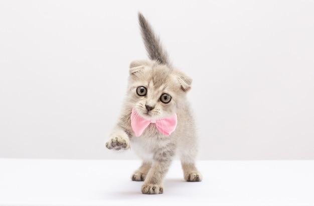 흰색 또는 회색 배경에 분홍색 활을 목에 두르고 앉아 있는 작고 귀여운 회색 및 흰색 장난기 많은 새끼 고양이:선물, 텍스트 위치, 소프트 포커스