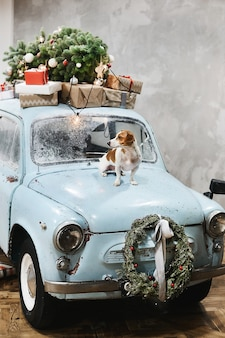 Маленькая милая собака джек рассел терьер сидит на капоте синего ретро-автомобиля с подарками на крыше