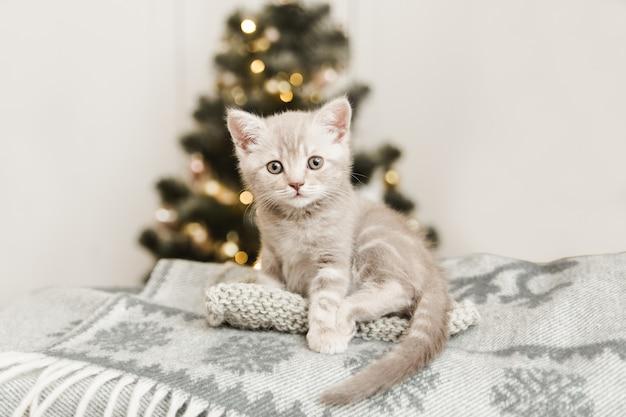 格子縞のクリスマスの毛布の上に座っている小さなかわいい子猫