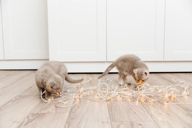 クリスマスライトと小さなかわいい子猫。コピースペース