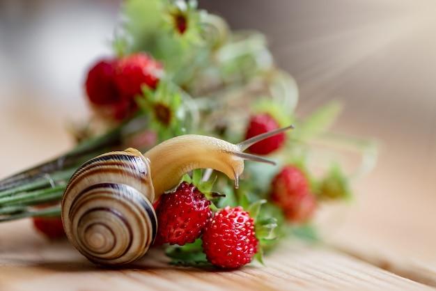 Маленькая милая улитка с полосатой раковиной сидит на букете из веточек земляники с красными спелыми ягодами
