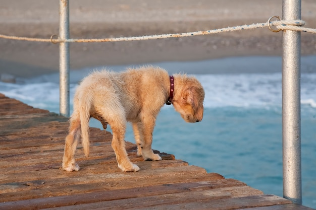 Small cute wet puppy dog stands on the pier. pets concept.