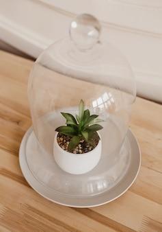 ガラスの下の小さな装飾植物。インテリアの追加としての植物