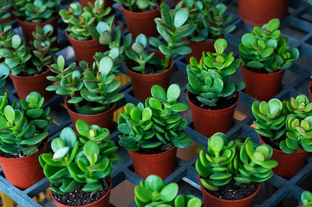 Small decorative flower pots with succulents. view from above. decor with fresh flowers