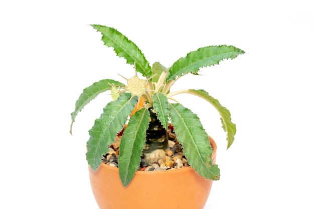 절연 냄비에 작은 장식 식물. 전면보기.