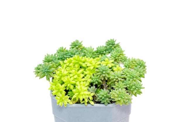 Small decorative plant in pots isolated. front view.