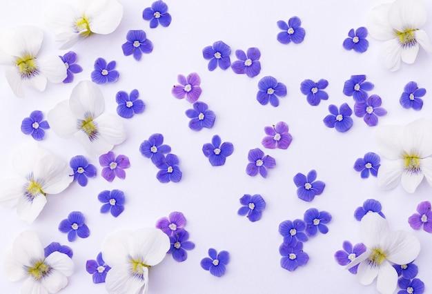 작고 섬세한 푸른 야생화와 흰색 배경을 채우는 큰 흰색 제비꽃