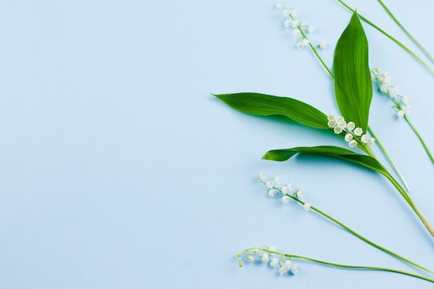 녹색 잎이있는 작은 섬세하고 깨지기 쉬운 신선한 흰색 백합 꽃이 파스텔 블루에 놓여 있습니다.