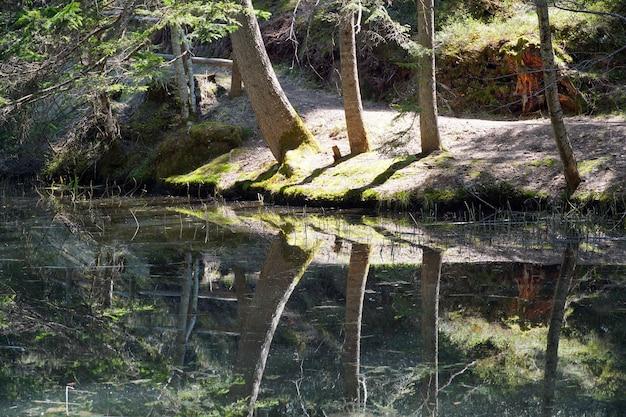 Piccolo lago sporco chiamato sulfne in alto adige
