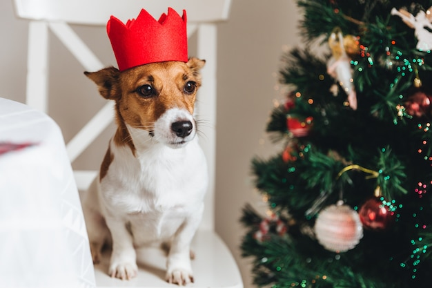 Small dog of jack russell breed poses against decorated fir tree, sits on armchair