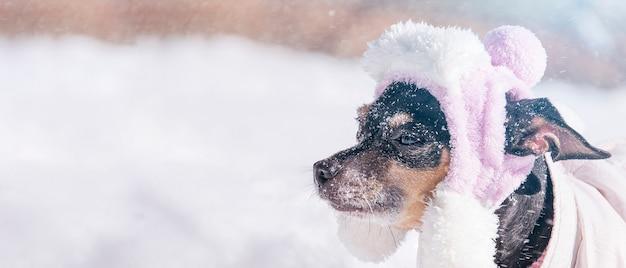 Маленькая собака на фоне снежной зимы.