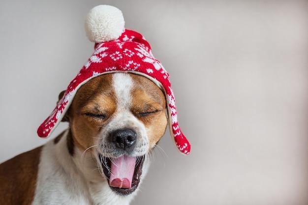 Маленькая собака портрет в зимней рождественской шапке с открытым ртом и закрытыми глазами