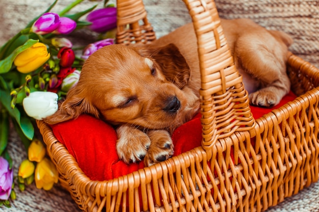 The small dog sleeping   in the cubby near flowers