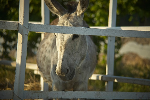 A small donkey with a sad look, closed in his enclosure and deprived of his freedom.
