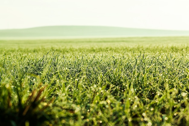 Маленькие капли воды на зеленой траве