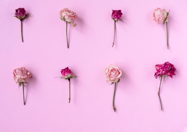Small dry roses on pastel pink background