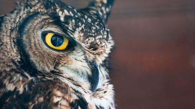 小さなヨーロッパのフクロウ、鷹のようなくちばしと爪を持つ夜行性の猛禽類、正面を向いた目を持つ大きな頭