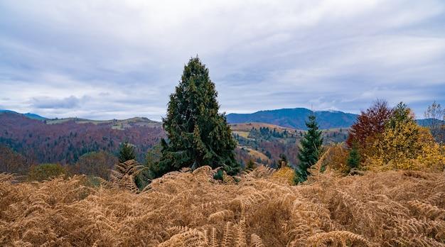 Небольшое поле с дикой сушеной травой