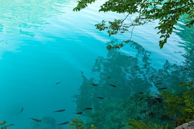 Мелководье рыб в лазурном чистом прозрачном озере и отражение дерева в поверхности воды.